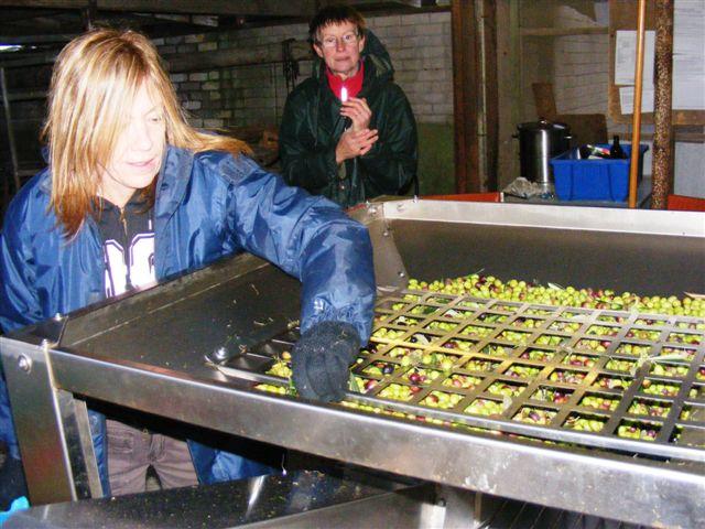 Extra Virgin Olive Oil in Australia